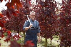 从事园艺英俊的老人拿着一把铁锹在庭院里 免版税库存照片