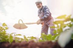 从事园艺,农业的概念 年长人农夫画象在菜园里 免版税库存图片