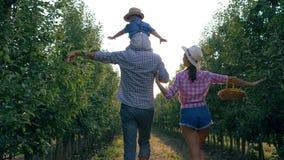 从事园艺,走通过苹果树的年轻种田的家庭在时间收获 影视素材