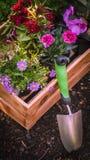 从事园艺 园艺工具和条板箱充分华美的植物准备好种植在晴朗的庭院里 春天庭院运作概念 免版税库存照片