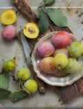 从事园艺 在葡萄酒银盘的黄色和紫色李子在农村黑暗的桌上 库存图片