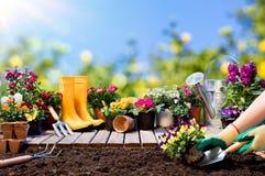 从事园艺-种植蝴蝶花的花匠 免版税图库摄影
