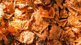 从五颜六色的秋叶的背景 免版税库存照片