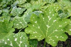 从亚洲庭院的叶子 库存图片