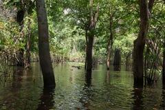 从亚马逊雨林的全景,巴西沼泽地区域 免版税库存照片