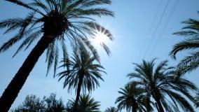 从低点的棕榈视图 影视素材