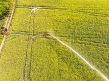从供给植物的洒水装置的鸟瞰图把水从与油菜子芸苔napus的一个开花的领域 库存图片
