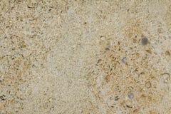从克里米亚半岛壳的米黄背景 库存照片