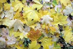 从全部的背景下落的黄色在地面上离开户外 库存图片