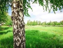 从公园的美丽的景色 免版税库存图片