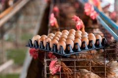 从农场的未加工的鸡蛋 库存照片