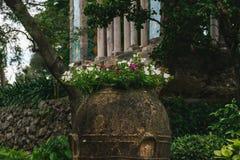 从别墅Cimbrone,拉韦洛,阿马尔菲海岸,意大利的美丽的花 免版税库存照片