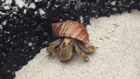 从加拉帕戈斯的蜗牛 免版税库存照片
