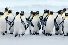 从南极洲的动物 小组一起回来从海的企鹅国王使与波浪蓝天,志愿点, Falkl靠岸 图库摄影