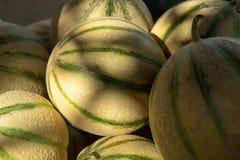 从卡瓦永,成熟圆的charentais蜂蜜甜瓜的瓜我 库存图片