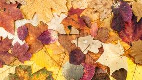 从各种各样的叶子的全景秋天背景 库存照片
