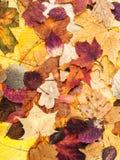 从各种各样的多色叶子的秋天背景 免版税图库摄影
