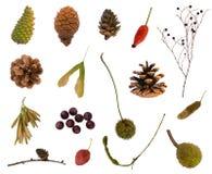 从各种各样的植物的秋天果子 免版税库存照片