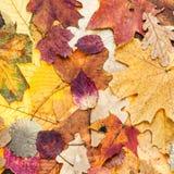 从各种各样的颜色叶子的秋天背景 库存照片