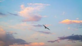 从后面的飞行海鸥在色的多云天空 免版税库存图片