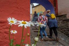 从后面看见的一个小组3名妇女与白色和黄色雏菊,Portmeirion,北部威尔士 库存图片