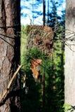 从吠声棍子和杉木锥体的一尊森林神象做哄骗精神 异端 库存照片
