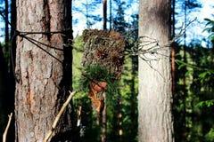 从吠声棍子和杉木锥体的一尊森林神象做哄骗精神 异端 免版税库存图片