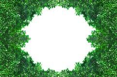 从在与空间的白色背景隔绝的绿色叶子的框架文本的 库存图片
