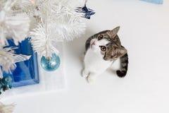 从在坐在新年树下的逗人喜爱的小猫的看法上 免版税图库摄影
