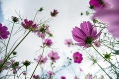 从在底下的紫色花视图 库存图片