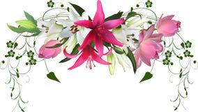 从在白色的桃红色莲花和百合花设计 库存照片