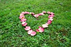 从在草排行的秋叶的心形 免版税库存图片