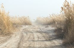 从在路的SUV拂去灰尘有藤茎的 免版税库存照片