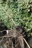 从在阴天来的另一个世界的青蛙 库存照片