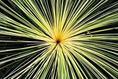 从地面的太阳 免版税图库摄影