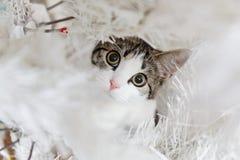 从坐在新年树下的逗人喜爱的小猫上画象 免版税库存图片