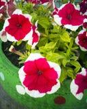 从塑料瓶的花 庭院的装饰做它你自己 重复利用塑料 废物的装饰 ?? 库存照片