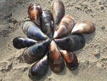 从壳的花 库存照片