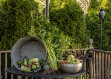 从夏天收获的庭院富饶在谦虚后院 库存图片