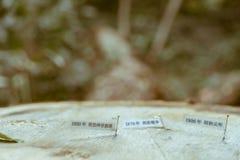 从多年来显示它的成长的一棵老日本树的一个树桩,标记用小笔记 库存图片