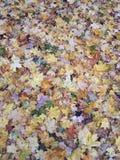 从多彩多姿的秋叶的地毯 免版税库存图片