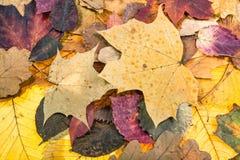 从多色下落的叶子的秋天背景 免版税库存照片