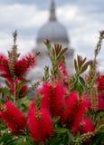 从大炮桥梁屋顶平台,伦敦英国的看法 红色洗瓶刷在前景的焦点 St保尔斯圆顶在后边软的焦点 库存照片