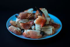 从大西洋海岸的螃蟹爪 免版税库存照片