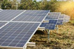 从太阳光的太阳农厂绿色能量 库存照片