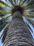 从孩子景色的棕榈树 库存图片