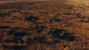 从审阅大草原的游人的顶端一个看法 股票录像