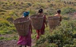 从容不迫的寿命尼泊尔 库存图片