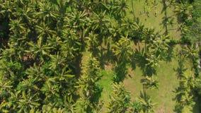 从寄生虫的热带看法与可可椰子 空中录影 影视素材