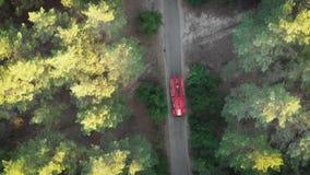 从寄生虫的顶视图到驾驶沿路的红火卡车在杉木森林里 股票视频